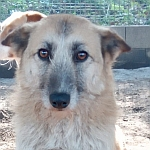 Bild von einem hilfsbedürftigen Tier