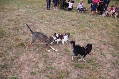 Bild vom elften Hundetreffen