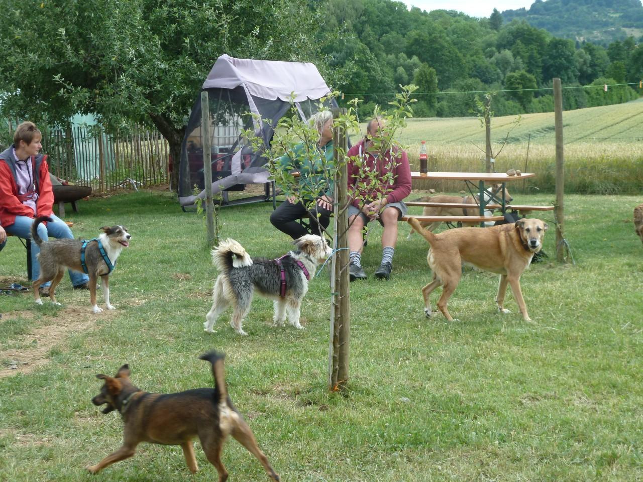 Bild vom zwölften Hundetreffen