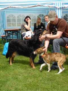 Bild vom ersten Hundetreffen