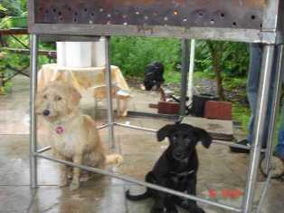Bild vom dritten Hundetreffen