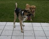 Sam und Paco