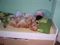 Bild vom Hund Paco